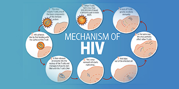 mechanism-of-hiv_blog